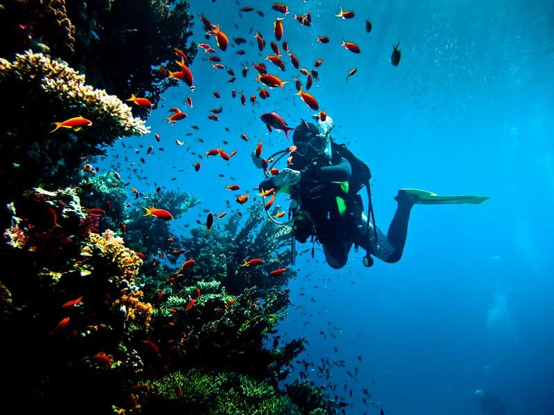 Заборона на дайвінг з плавальних засобів в Єгипті